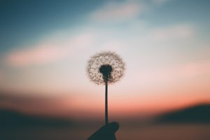 Beautiful Poems To Shift Your Perspective